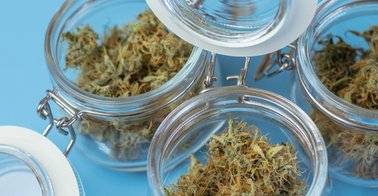 Open glass jars of cannabis against blue background
